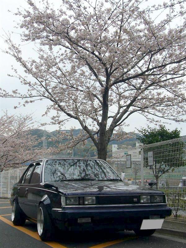 Yokosukas Carina AA63 under Cherry Blossom (sakura)
