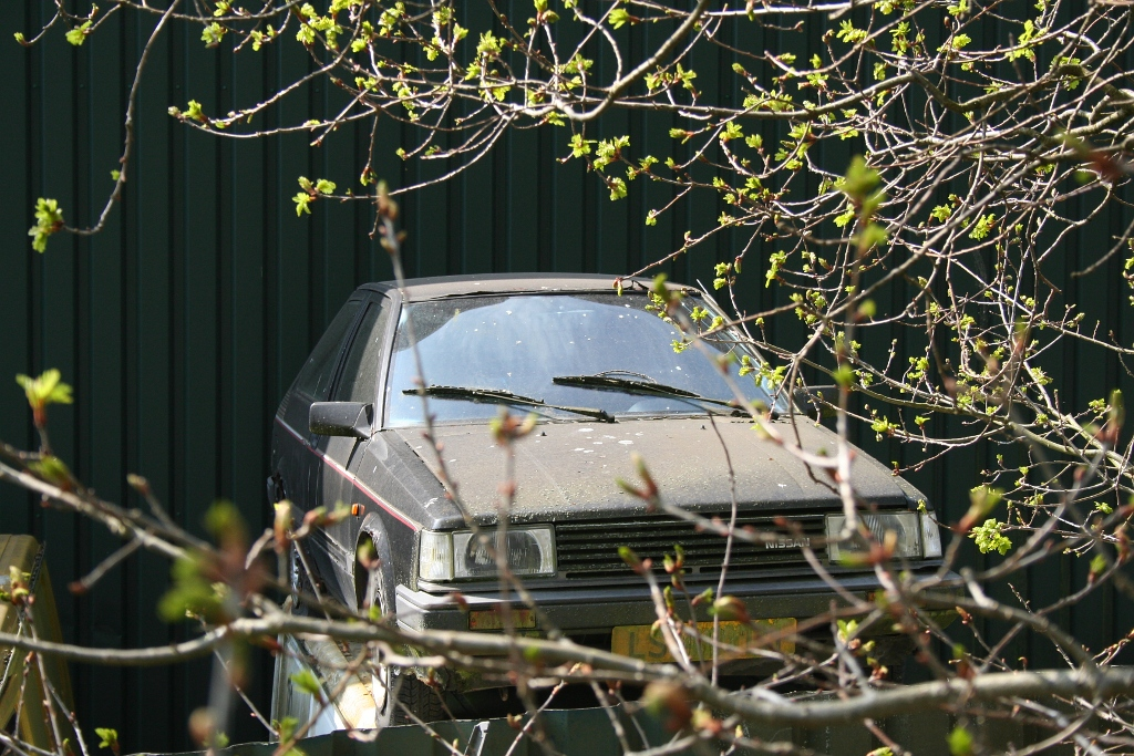 Nissan Cherry N12 covered in fungus!